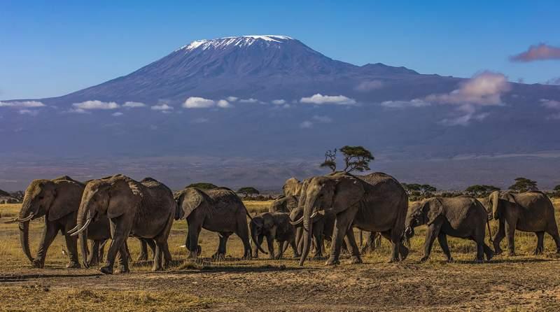 KAREN SMALLEY Morning Stroll  Mount Kilimanjaro