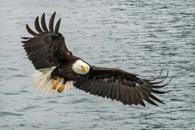 Eagle Attack, Langevin  Dee , Usa