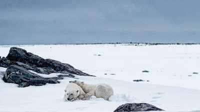 Snuggling Bears, Dellanave  Gabriele , Usa