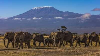 Morning Stroll  Mount Kilimanjaro, Smalley  Karen , England