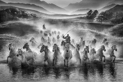 RUNNING HORSES 1, Hung  Yuk Fung Garius , Hong Kong