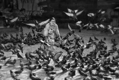 A Flock Of Flying Pigeons 4, Kong  Ka-pak , Macau