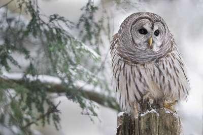 Winter Of Nature, Chan  Tin Sang , Canada