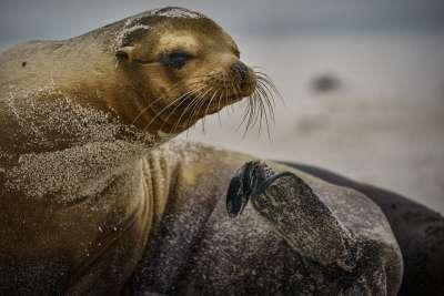 Sea Lion12, Ye  Danlei , Canada