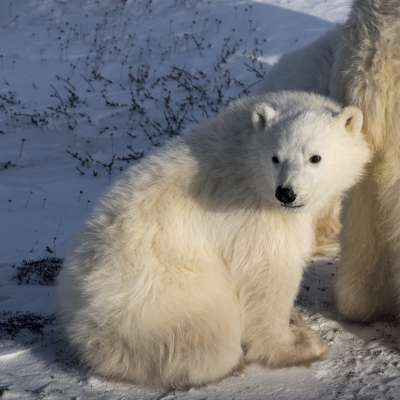 The Polar Bear32, Ye  Danlei , Canada