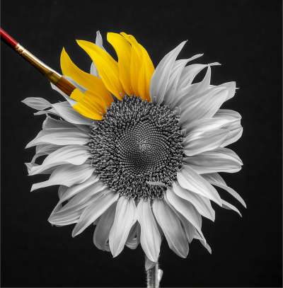 Flowerpainter, Thomas  Peter , South Africa