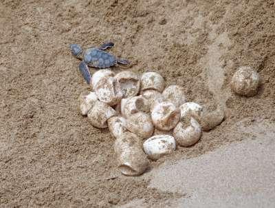 Release Of Turtles, Hadjipavlou  Thanasis , Cyprus