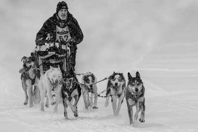 Dog Sled Fun, Chan  Betty , Canada